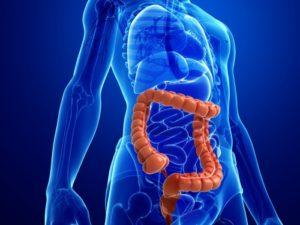 Read more about the article Como está o seu intestino?